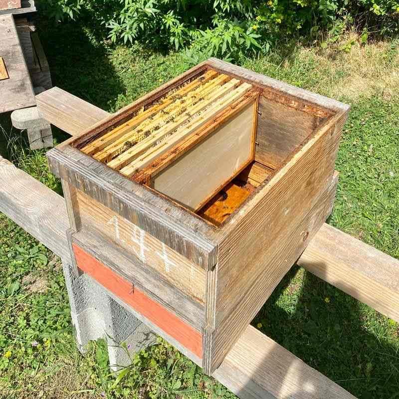 Bio 4 Waben Ableger Bienenvolk Villa Erbse Wien